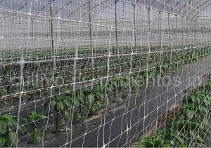 HORTOMALLAS, Cultivo de Pimientos, doble malla, cultivo de pimientos, invernadero, pimientos en invernadero