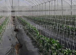 HORTOMALLAS, Cultivo de Pimientos, doble malla, cultivo de pimientos, pimientos en invernadero